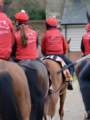 horses-in-training